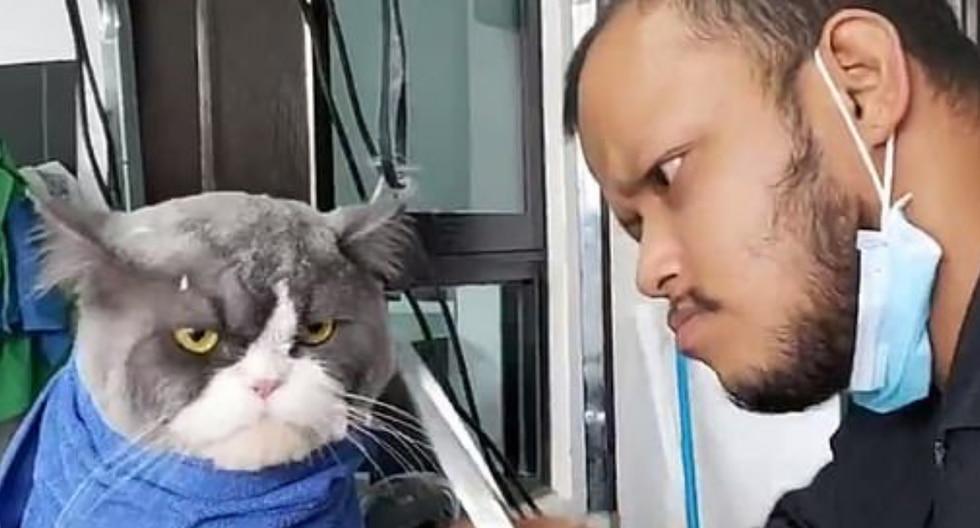 """Un gato evidencia su malestar por tener que someterse a la """"tortura"""" del corte de pelaje. (Foto: It's Gone Viral en Facebook)"""