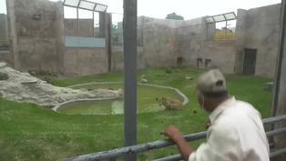 Parque de Las Leyendas: cuidadores celebraron el Día del Padre rodeados de animales