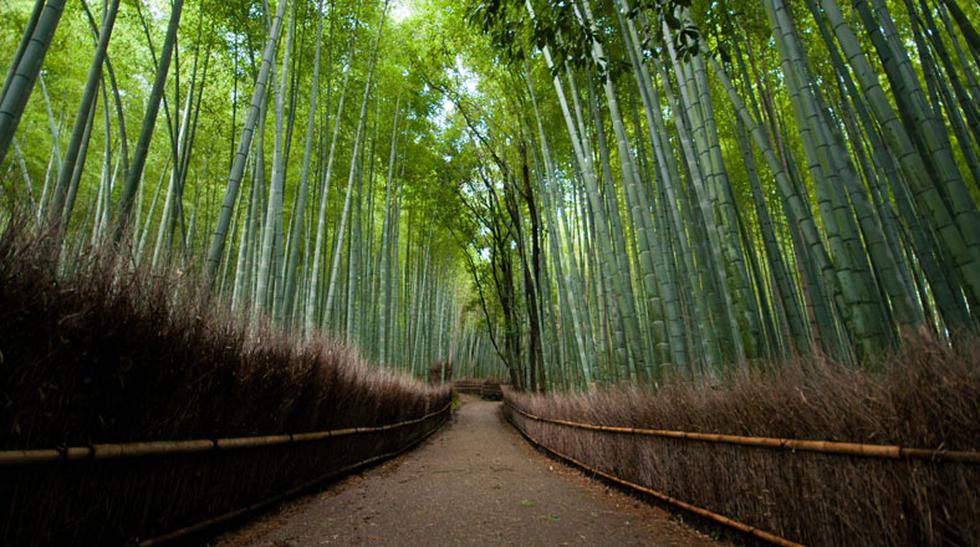COP 20: Los bosques más hermosos y mejor conservados del mundo - 1