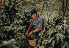 El Abuelo Valdizano, la marca de café lanzada por 20 adultos mayores en Huánuco