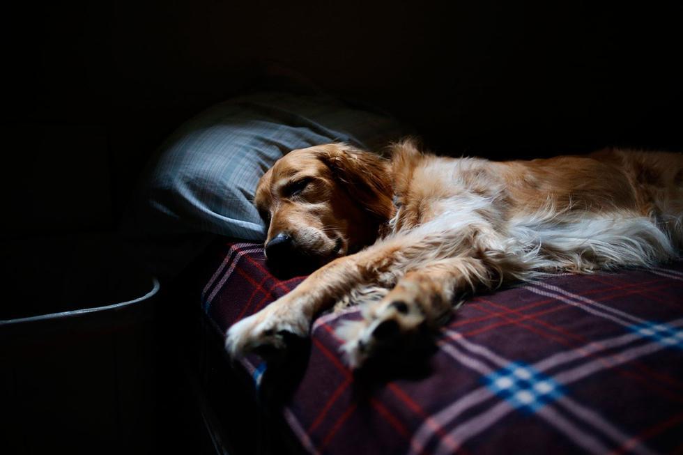 El dueño del  perro instaló una cámara en casa y lo  que vio lo dejó atónito. El video viral de Facebook cuenta con miles de reproducciones.  (Foto: Pixabay)