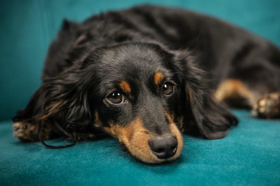 FOTO 1 DE 3 | No es fácil detectar de forma precoz los tumores en gatos y perros a menos que se realicen chequeos periódicos | Foto: Pexels (Desliza a la izquierda para ver más fotos)