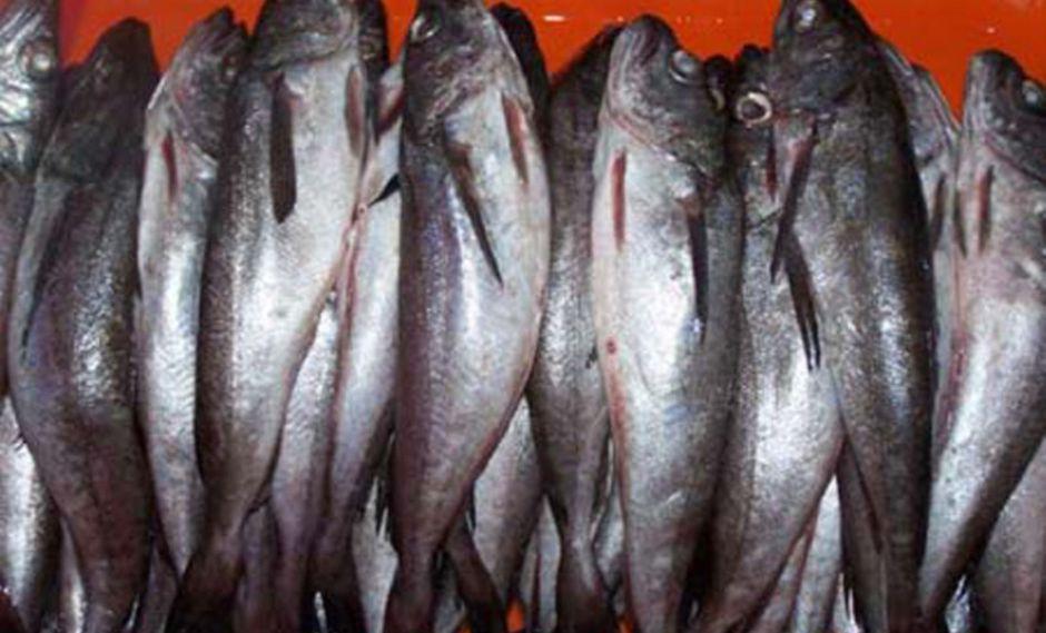 La pesca estará permitida en el área marítima comprendida desde el extremo norte del dominio marítimo del Perú y los 07°00' Latitud Sur. (Foto: Andina)