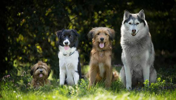 Se viralizó en YouTube la cena de una familia de perros de Pensilvania, Estados Unidos, que se disfrazó para la ocasión. (Foto: Captura)