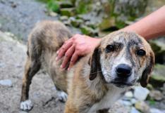 ¿Cómo ayudar a un perro solo y desorientado?