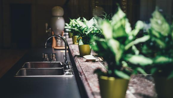 Las plantas aromáticas le darán un ambiente especial a tu cocina. (Foto: Pixabay)