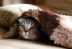 Mascotas: ¿por qué no debemos medicarlas sin consultar al veterinario?