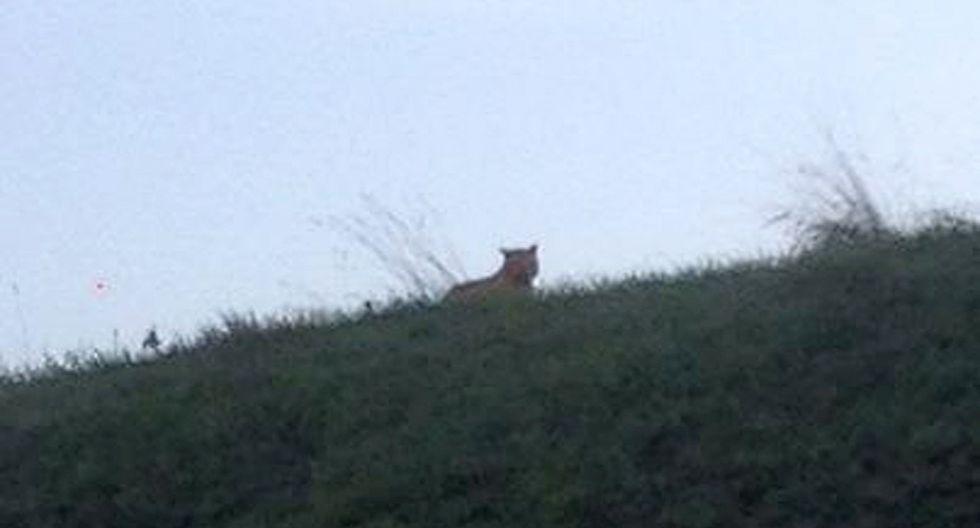Supuesto tigre movilizó en Disney-París a más de 200 cazadores - 1
