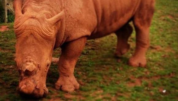 [BBC] El zoológico en el que 500 animales han muerto en 4 años