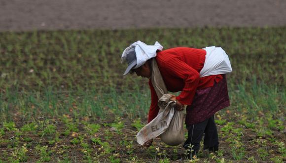 AGAP pide la incorporación de todos los actores de las cadenas productivas agrarias en el grupo de trabajo sectorial. (Foto: GEC)