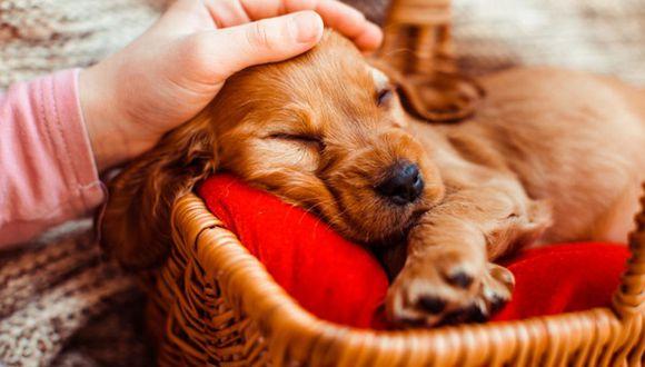 Algunos casos de perros que nacieron color verde existen en Estados Unidos (Foto: Referencial/Freepik)