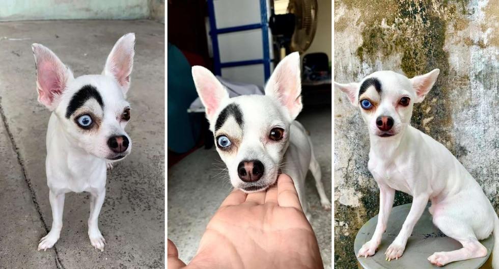 'Lucky' se convirtió en una estrella en Internet gracias a su particular look. (Fotos: Charice Fca Cha en Facebook)
