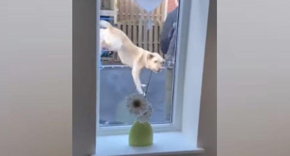 Al cabo de unos segundos, el perro se animó a saltar y al niño solo le quedó mirar cómo se divertía. (YouTube: ViralHog)