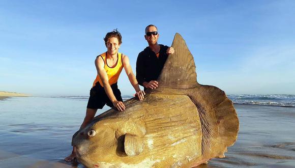 El ejemplar de pez luna aparecido en las costas australianas el pasado fin de semana. (Foto: AFP)