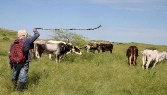 Minagri: Sector agropecuario creció 1,8% en primer bimestre