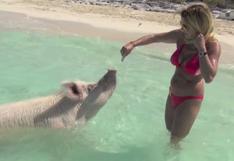 ¿Una magnífica isla paradisíaca, repleta de cerdos?