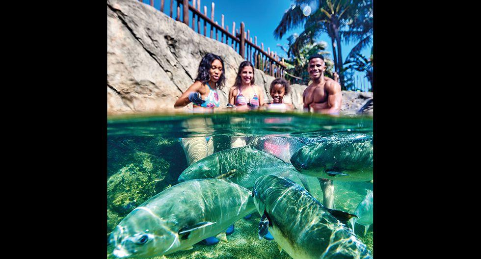 Ushaka Marine World (Sudáfrica). La riqueza del océano Índico está representada en Sea World, el acuario del parque de Ushaka, en la ciudad de Durban. Hay espacios exclusivos para delfines, focas y pingüinos. También, ambientes donde conocer a los animales más peligrosos, como la serpiente de mar, el pez piedra o el tiburón blanco. La entrada cuesta US$14.