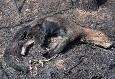 Estudio en Bolivia estima que casi seis millones de animales murieron en la Chiquitania por los incendios del 2019