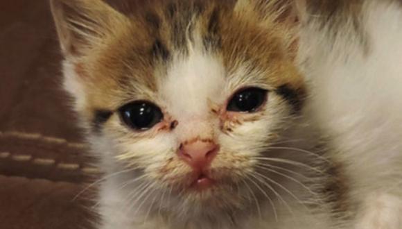 La gatita luce con rasguños y los ojos lagrimosos, debido a haber vivido sus primeras semanas en la calle. (Foto: Facebook / Kyra Cat)