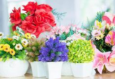 Feng Shui: descubre las plantas que debes tener en casa | FOTOS