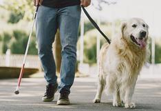 WUF: perros de terapia y perros de asistencia, ¿cuál es su trabajo y en qué se diferencian?