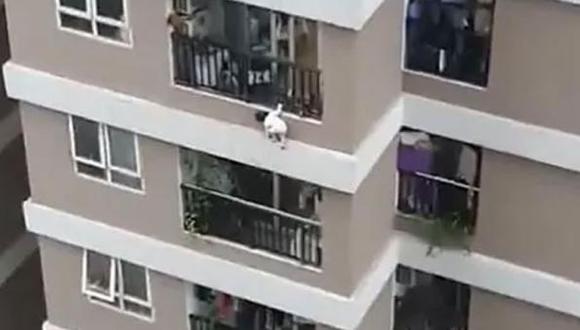Un repartidor salva a una niña de 3 años que cayó de una altura de 12 pisos en Vietnam. (Captura de video).