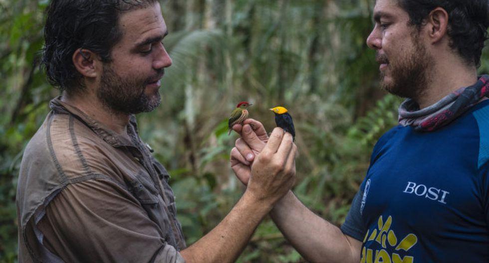 La pasión de Diego Calderón son las aves. Lleva más de 20 años dedicado a ellas y ha sido uno de los principales organizadores del Global Big Day en Colombia, evento en que el país es el campeón. Foto: Federico Ríos Escobar.