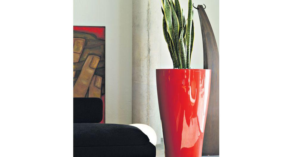 Plantas en casa: descubre cuáles son ideales para interiores - 3