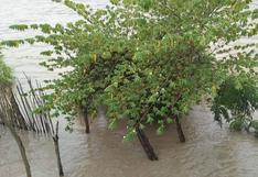 Amazonas: desborde del río Marañón deja 25 familias damnificadas en Cumba