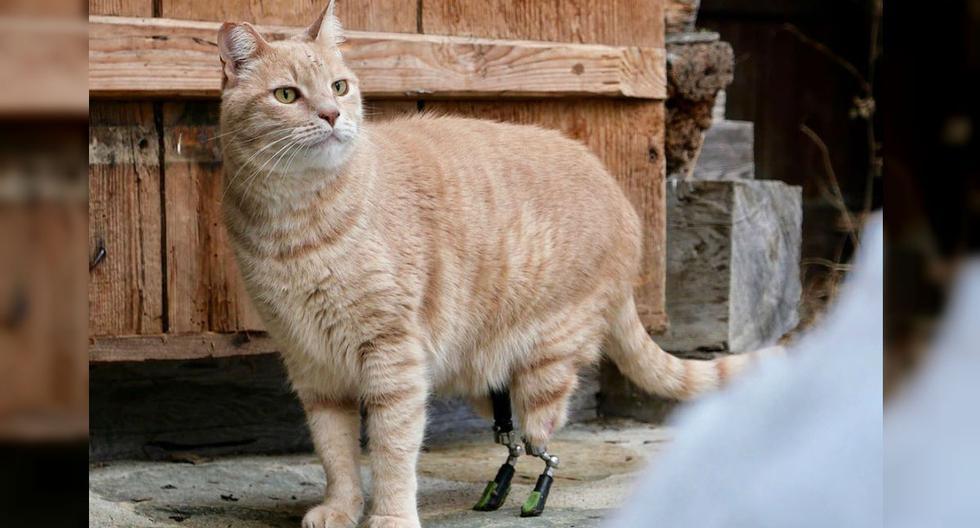 Vituzzo fue intervenido en diciembre de 2019 con dos prótesis que permiten su movilidad y diversión. (Foto: Instagram)