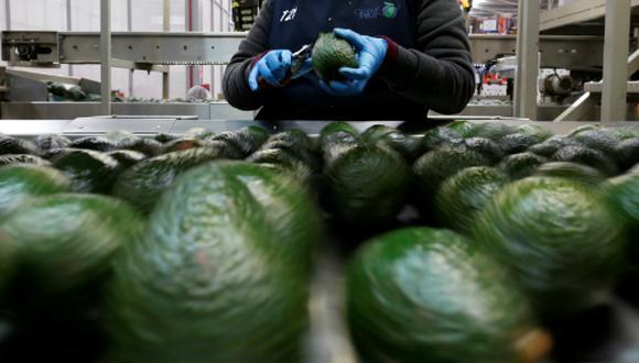 La palta es uno de los productos que busca colocar el Minagri. (Foto: Reuters)