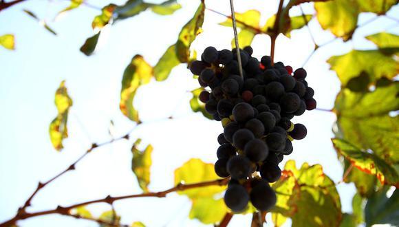 Las uvas fueron el producto más importante despachado al exterior. (Foto: GEC)