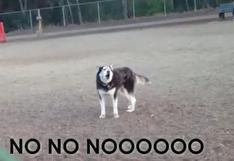 ¿Un perro pide que no se lo lleven del parque? [VIDEO]