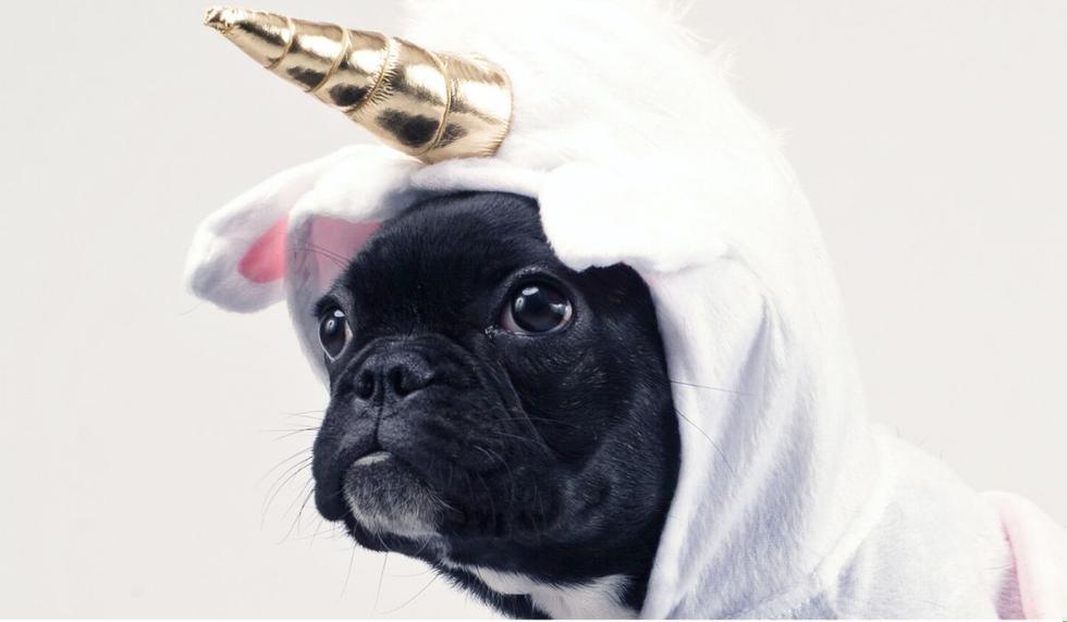 El perrito conquistó a miles en las redes. Desliza ahora para ver las imágenes. (Foto referencial: Pexels)