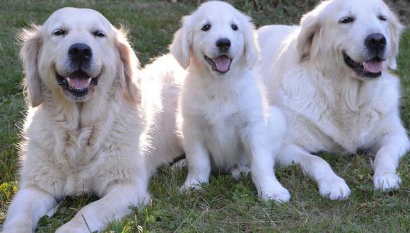 Tres canes se volvieron protagonistas de un insólito momento que fue compartido en YouTube. (Pixabay)