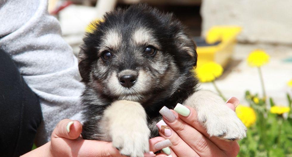 El can ha enternecido a miles en las redes sociales. (Referencial - Pixabay)