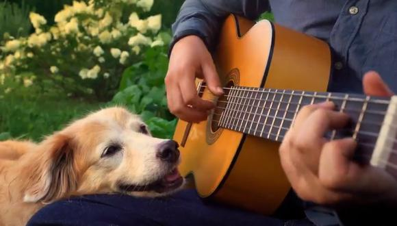 Un músico se despidió de su perrita fallecida y conmovió en Internet. (Foto: @AcousticTrench / Twitter)