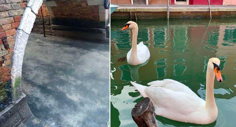Sin turistas, góndolas amarradas y aguas cristalinas. Así luce Venecia, en Italia, en plena cuarentena por el coronavirus. (Foto: Facebook / Venezia Pulita)