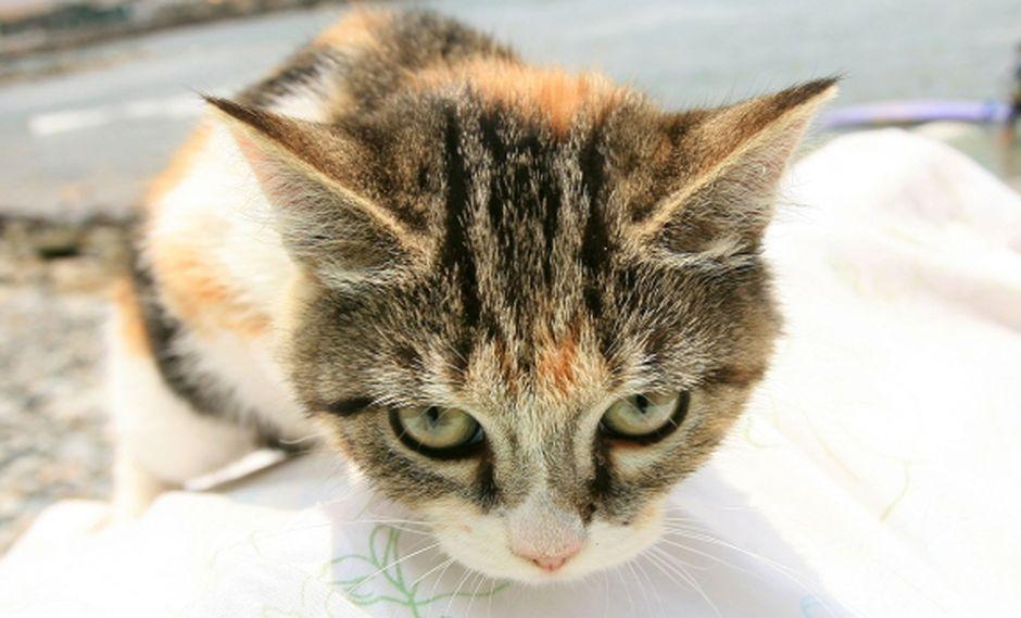 Gatos contagian de tuberculosis a dos personas