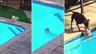 Viral: Perrito es salvado cuando estaba a punto de ahogarse