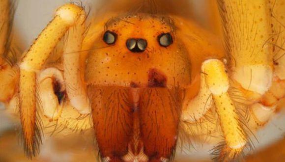 Advierten posible aparición de animales venenosos tras huaicos