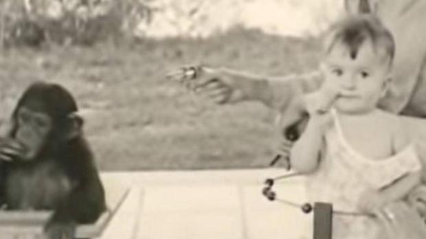 Donald Kellogg adoptó comportamientos propias de un chimpancé. (Foto: YouTube: encliticcopula).