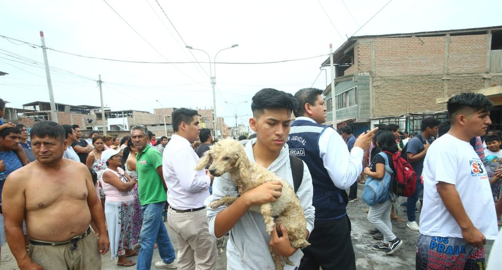 Mascotas han resultados afectados debido al incendio en Villa El Salvador producto de un accidente de camión cisterna que transportaba gas licuado.  (Foto: Gonzalo Córdova)