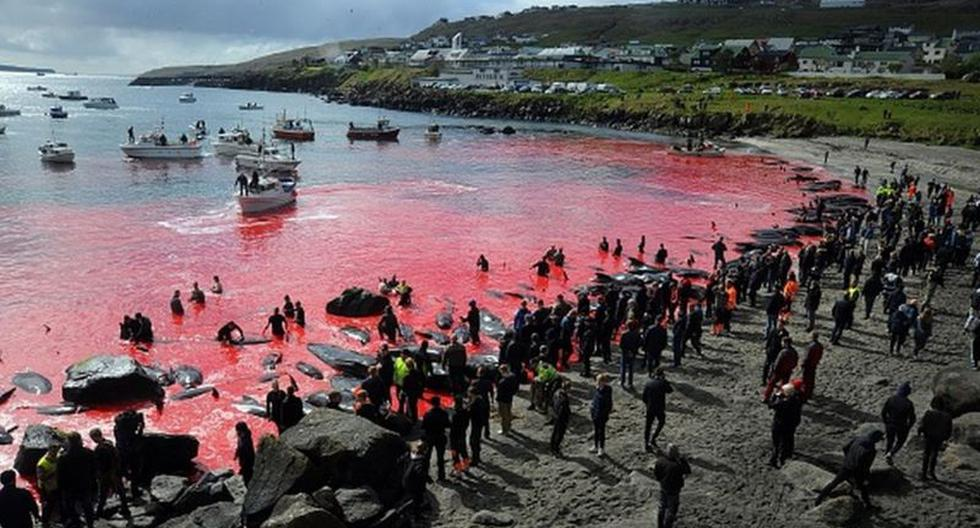 """""""Most are in shock"""": Anger in the Faroe Islands at the """"record"""" kill of more than 1,400 dolphins in one day"""