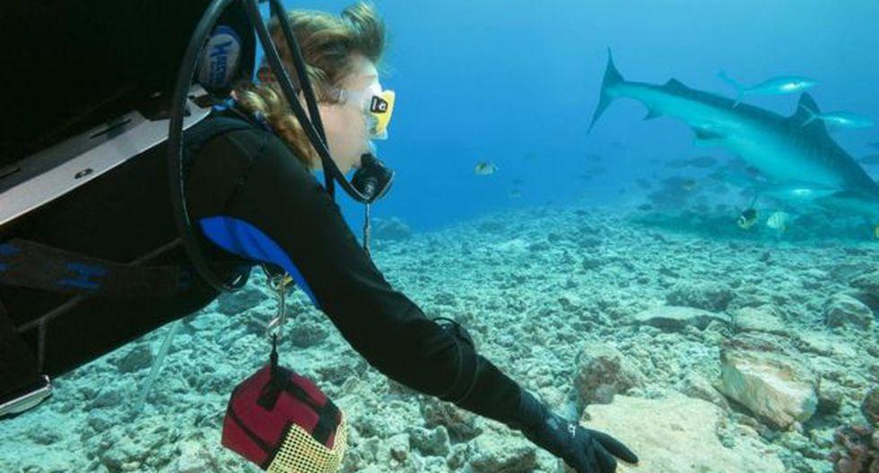 Aunque los tiburones tigre son una de las tres especies principales responsables de los ataques contra los humanos, muchas veces ignoran a las personas en el océano.