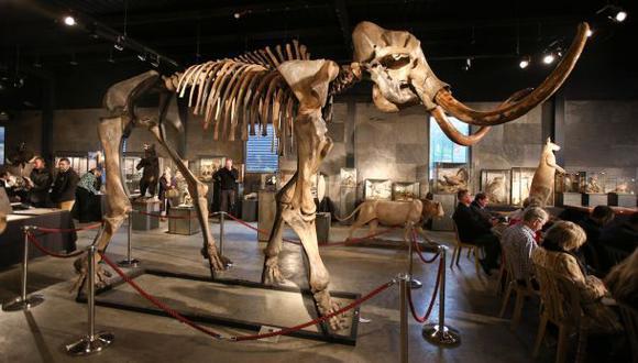 Insertan con éxito genes de mamut en elefante