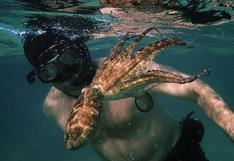 """""""My Octopus Teacher"""", la película que te hará bucear por el Atlántico desde el sillón de tu casa"""