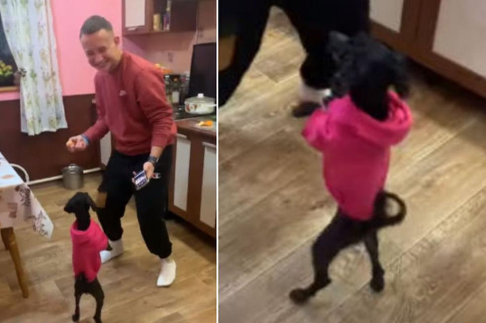 El perro no tuvo problema en permanecer erguido para 'seguir' los pasos de su dueño. (YouTube: ViralHog)