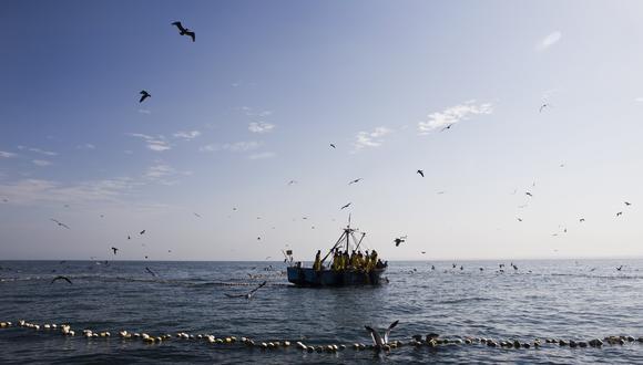 Mañana concluye la temporada de pesca de jurel. (Foto: GEC)