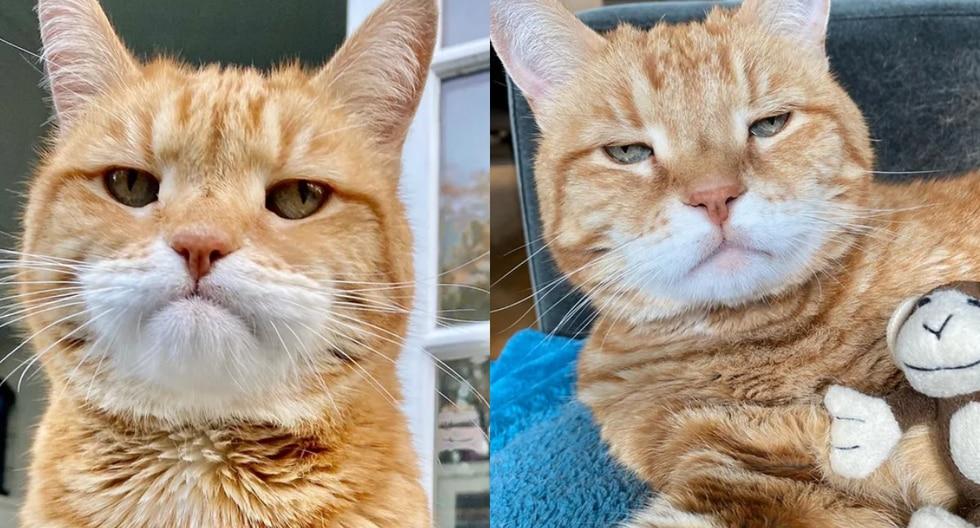 Muchos todavía lloran la partida del famoso 'Grumpy Cat' pero al parecer el Internet ya encontró a su digno sucesor: un gato llamado 'Marley'. (Fotos: marleykatz en Instagram)